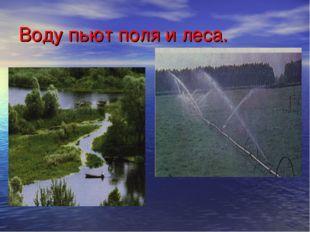 Воду пьют поля и леса.