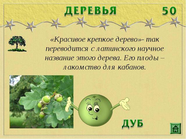 «Красивое крепкое дерево»- так переводится с латинского научное название этог...
