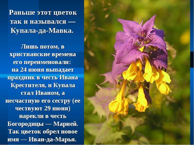 Раньше этот цветок так и назывался — Купала-да-Мавка. Лишь потом, в христианс...