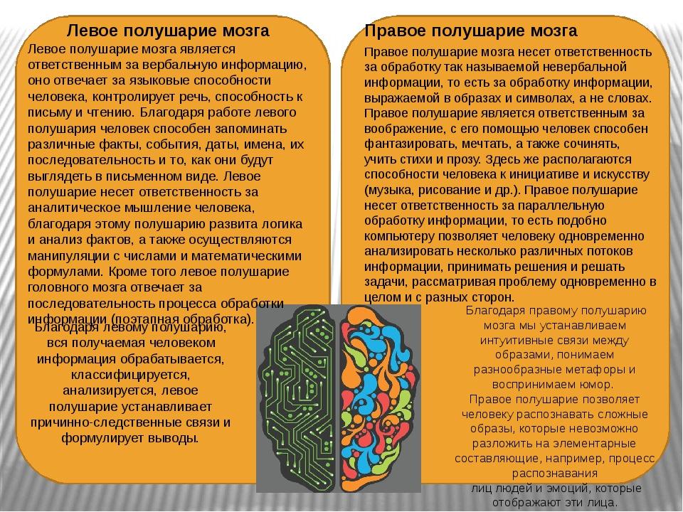Правое полушарие мозга Правое полушарие мозга несет ответственность за обраб...