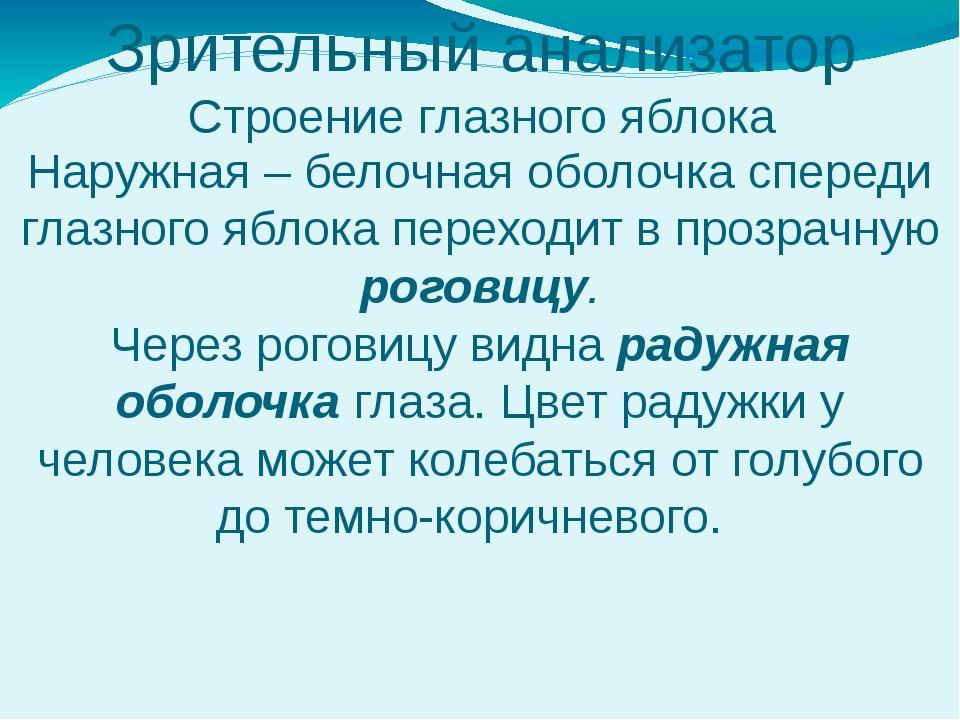 Зрительный анализатор Строение глазного яблока Наружная – белочная оболочка с...