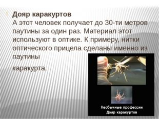Дояр каракуртов А этот человек получает до 30-ти метров паутины за один раз.