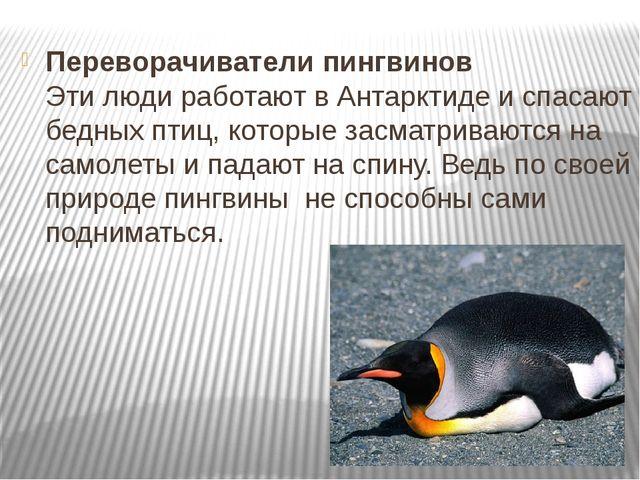 Переворачиватели пингвинов Эти люди работают в Антарктиде и спасают бедных пт...