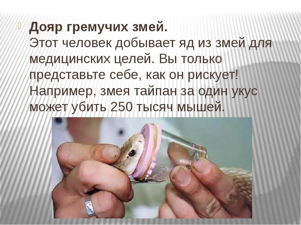 Дояр гремучих змей. Этот человек добывает яд из змей для медицинских целей. В...