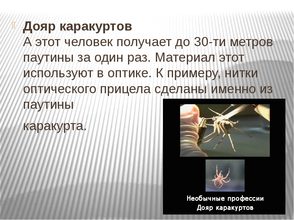 Дояр каракуртов А этот человек получает до 30-ти метров паутины за один раз....