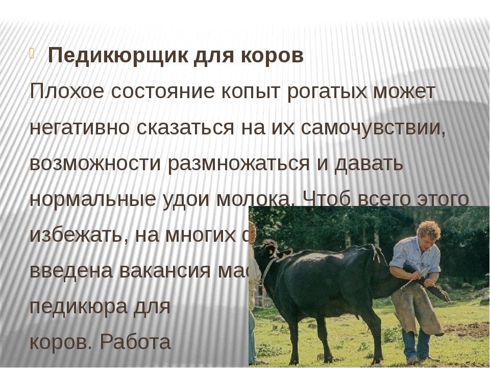 Педикюрщик для коров Плохое состояние копыт рогатых может негативно сказаться...