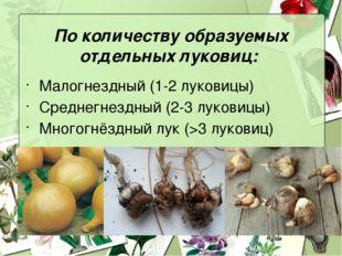 По количеству образуемых отдельных луковиц: Малогнездный (1-2 луковицы) Средн