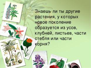 Знаешь ли ты другие растения, у которых новое поколение образуется из усов, к