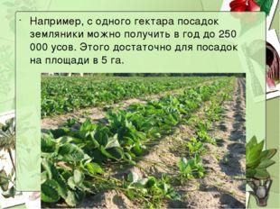 Например, с одного гектара посадок земляники можно получить в год до 250 000