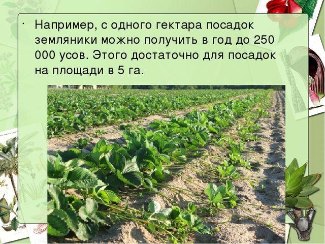 Например, с одного гектара посадок земляники можно получить в год до 250 000...