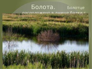 Болота. Болотце расположено в днище балки с близким залеганием грунтовых вод.