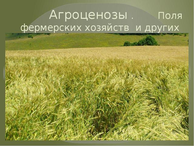 Агроценозы . Поля фермерских хозяйств и других сельхозпредприятий.