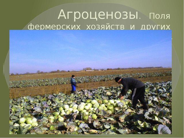 Агроценозы. Поля фермерских хозяйств и других сельхозпредприятий.