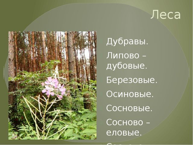 Леса Дубравы. Липово – дубовые. Березовые. Осиновые. Сосновые. Сосново – елов...