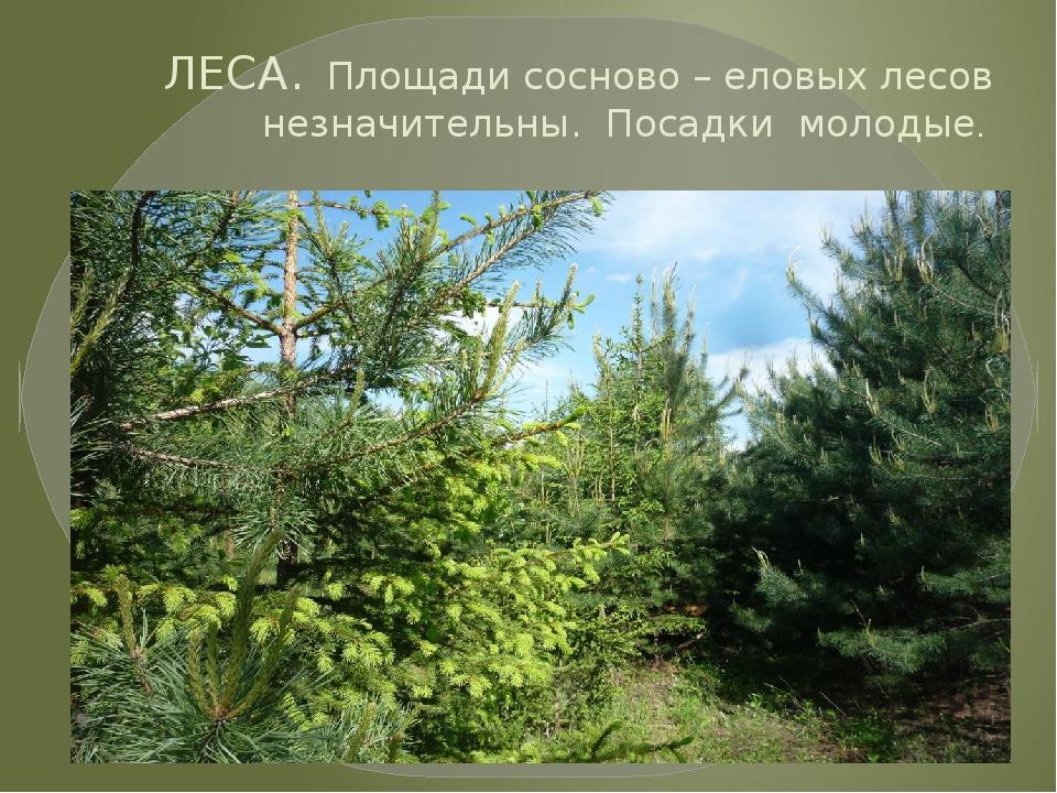 ЛЕСА. Площади сосново – еловых лесов незначительны. Посадки молодые.