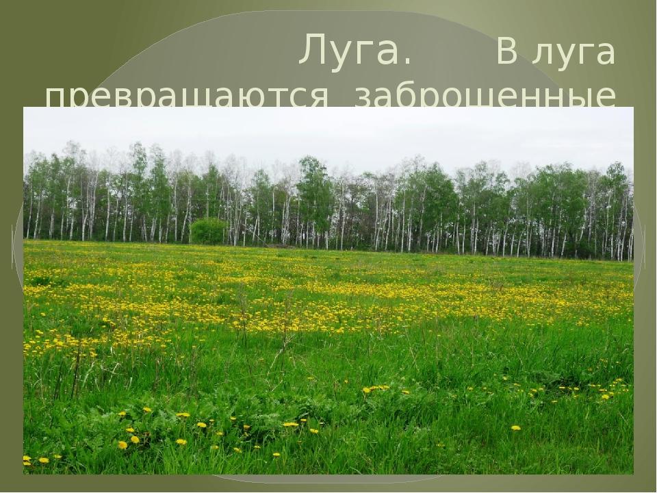 Луга. В луга превращаются заброшенные поля.