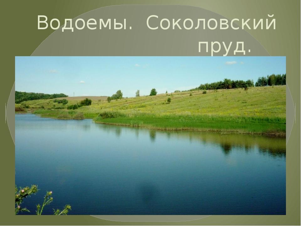 Водоемы. Соколовский пруд.