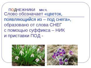 ПОДНЕЖНИКИ мн.ч. Слово обозначает «цветок, появляющийся из – под снега», обра