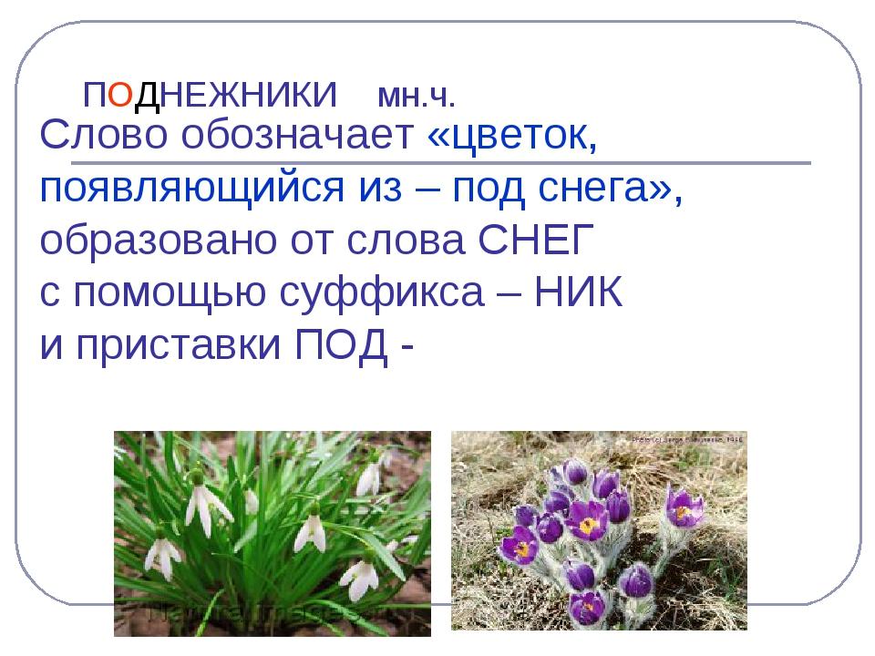 ПОДНЕЖНИКИ мн.ч. Слово обозначает «цветок, появляющийся из – под снега», обра...