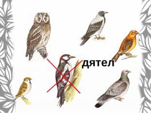Найди среди птиц воробья.