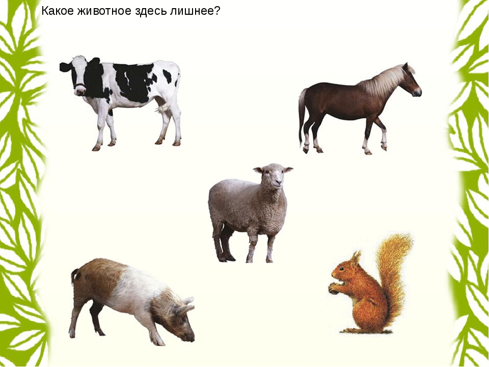 Какое животное здесь лишнее?
