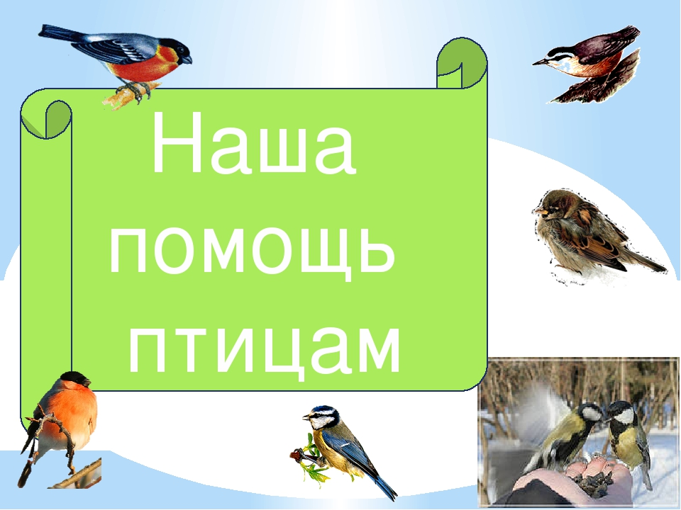 Наша помощь птицам