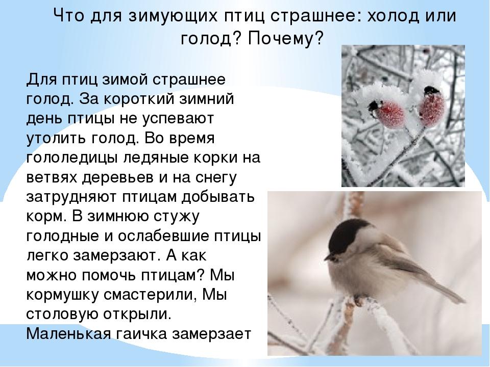 Для птиц зимой страшнее голод. За короткий зимний день птицы не успевают уто...