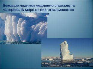 Вековые ледники медленно сползают с материка. В море от них откалываются ледя
