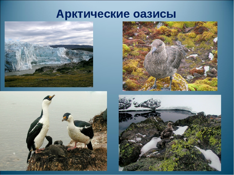 Арктические оазисы