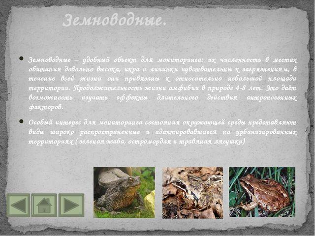 Земноводные – удобный объект для мониторинга: их численность в местах обитани...