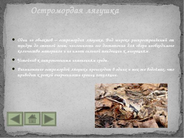 Один из объектов – остромордая лягушка. Вид широко распространённый от тундры...
