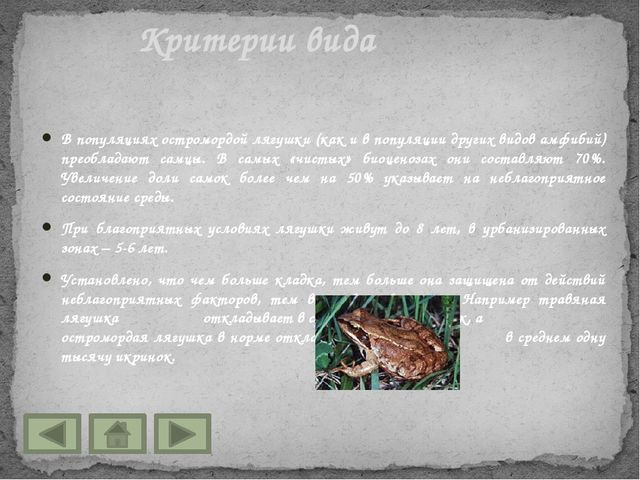 В популяциях остромордой лягушки (как и в популяции других видов амфибий) пре...