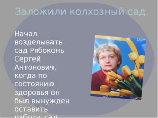 Заложили колхозный сад. Начал возделывать сад Рябоконь Сергей Антонович, когд