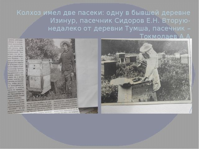 Колхоз имел две пасеки: одну в бывшей деревне Изинур, пасечник Сидоров Е.Н. В...