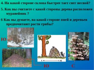 4. На какой стороне склона быстрее тает снег весной? 5. Как вы считаете с как