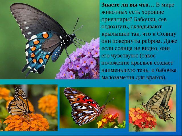 Знаете ли вы что… В мире животных есть хорошие ориентиры? Бабочки, сев отдохн...