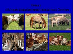 Тема : «История развития животноводства в Осетии»