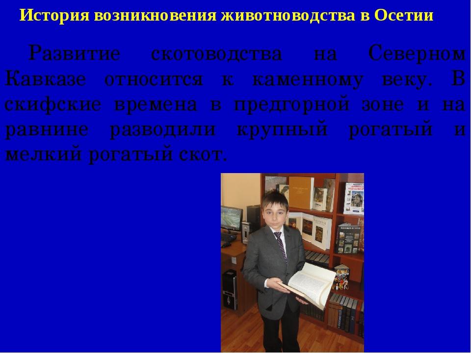 История возникновения животноводства в Осетии Развитие скотоводства на Север...