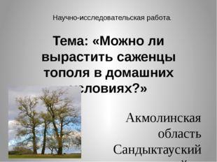 Тема: «Можно ли вырастить саженцы тополя в домашних условиях?» Акмолинская о