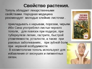 Свойство растения. Тополь обладает лекарственными свойствами.Народная медици