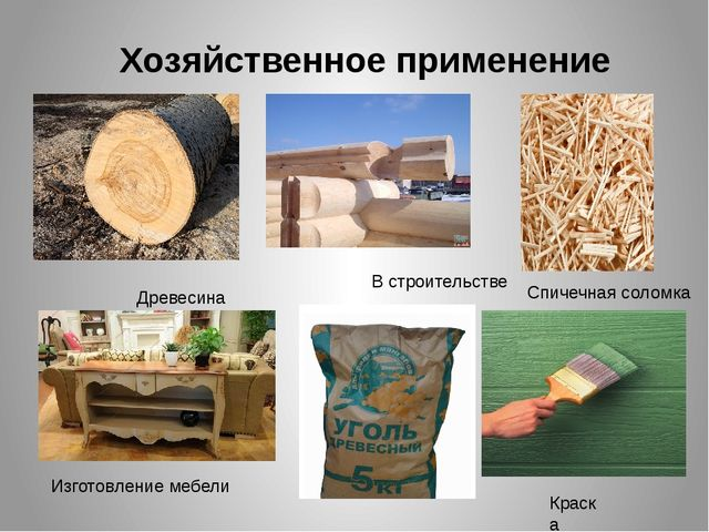 Хозяйственное применение Древесина В строительстве Спичечная соломка Изготовл...