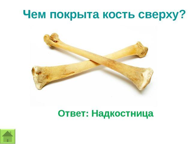 Чем покрыта кость сверху? Ответ: Надкостница