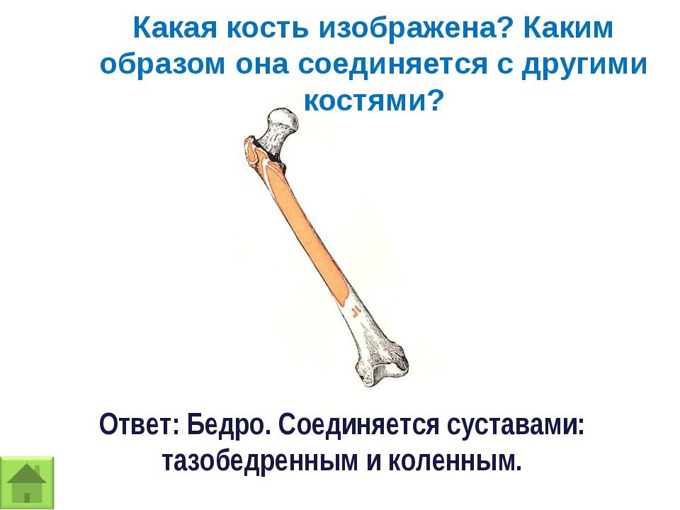 Какая кость изображена? Каким образом она соединяется с другими костями? Отве...