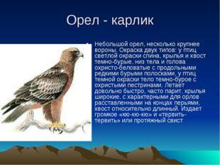 Орел - карлик Небольшой орел, несколько крупнее вороны. Окраска двух типов: у