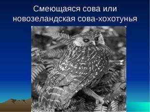Смеющаяся сова или новозеландская сова-хохотунья