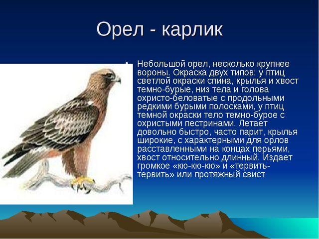 Орел - карлик Небольшой орел, несколько крупнее вороны. Окраска двух типов: у...