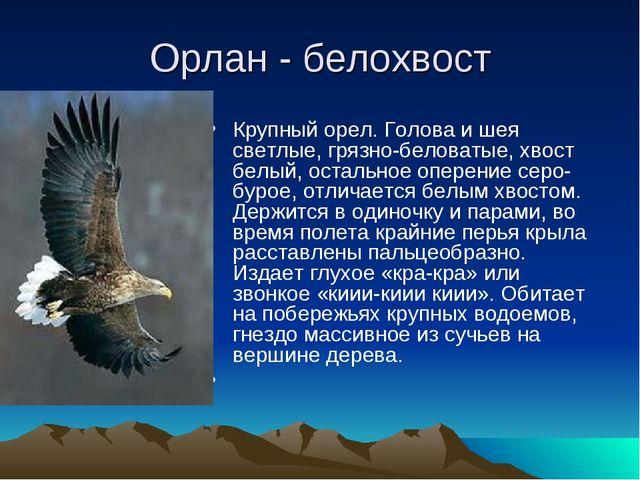 Орлан - белохвост Крупный орел. Голова и шея светлые, грязно-беловатые, хвост...