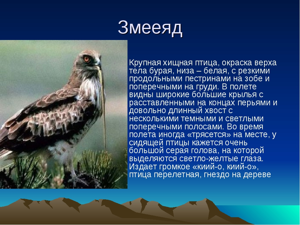 Змееяд Крупная хищная птица, окраска верха тела бурая, низа – белая, с резким...