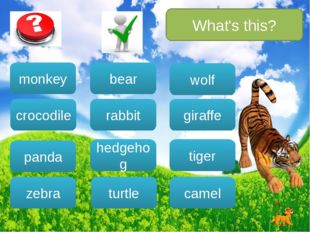 What's this? bear rabbit hedgehog turtle wolf camel giraffe tiger monkey croc