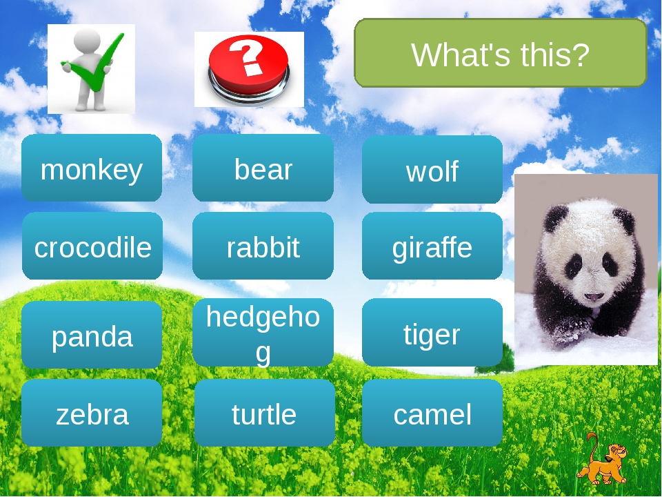 What's this? bear rabbit hedgehog turtle wolf camel giraffe tiger monkey croc...